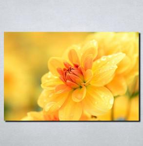 Slike na platnu Žuto cveće Nina111_P