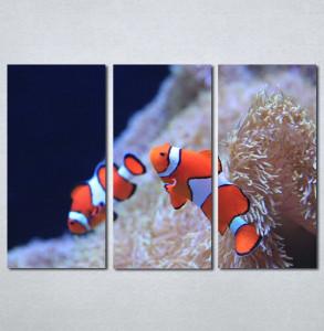 Slika na platnu Riba nemo Nina3081_3