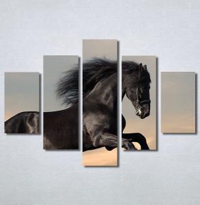 Slike na platnu Black horse Nina30296_5
