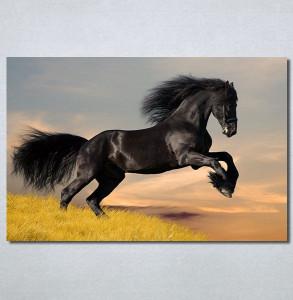 Slike na platnu Black horse Nina30296_P