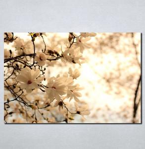 Slike na platnu Cvet voćke u proleće Nina099_P