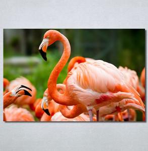 Slike na platnu Flamingo ptica Nina30256_P