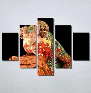 Slike na platnu Kameleon Nina30183_5