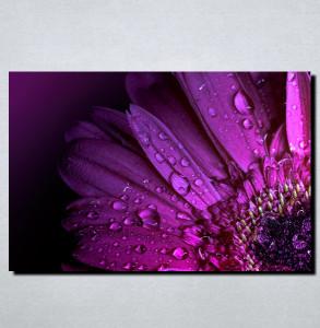 Slike na platnu Kapi rose i cvet Nina122_P