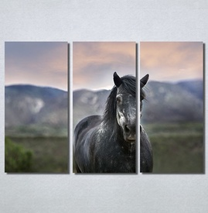 Slike na platnu Konj na poljani Nina30205_3