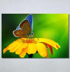 Slike na platnu Leptir Nina30237_P