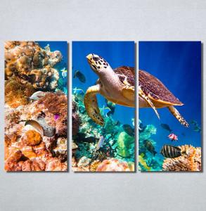 Slike na platnu Morski svet Nina30215_3