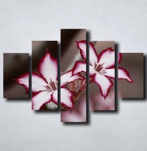Slike na platnu Neobican cvet Nina175_5