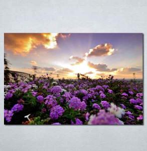 Slike na platnu Polje cveca Nina199_P