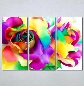 Slike na platnu Šarena ruža Nina30288_3