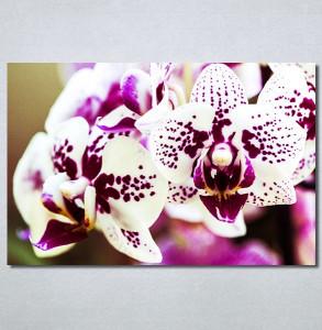 Slike na platnu Šarene orhideje Nina30217_P