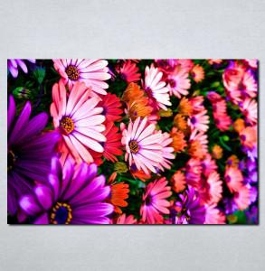Slike na platnu Šareno cvece Nina056_P