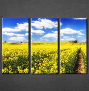 Slike na platnu Žuta poljana Nina3086_3