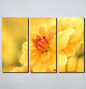 Slike na platnu Žuto cveće Nina111_3