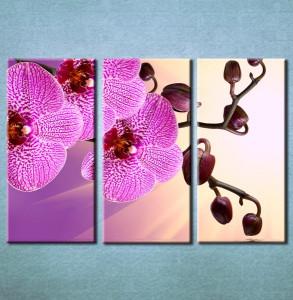 Slika na platnu Orhideja 3021_3