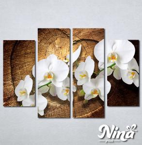 Slike na platnu Bele orhideje Nina323_4