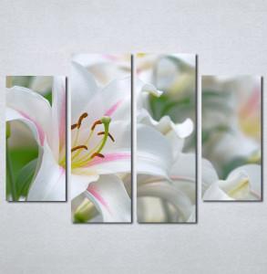 Slike na platnu  beli cvet_Nina130_4