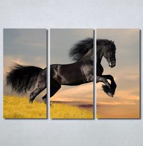 Slike na platnu Black horse Nina30296_3