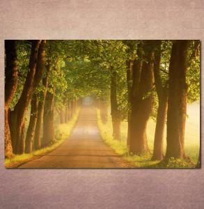 Slike na platnu Drvored Nina3083_P
