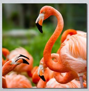 Slike na platnu Flamingo ptica Nina30256