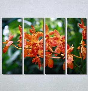 Slike na platnu Narandžasti cvet Nina30233_4
