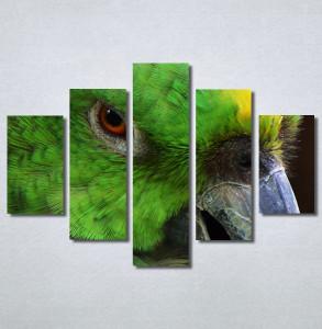 Slike na platnu Papagaj zeleni Nina30349_5