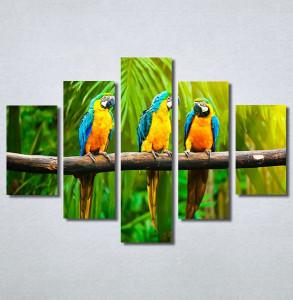 Slike na platnu Papagaji Are Nina30249_5