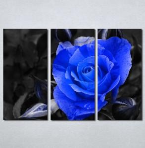Slike na platnu Plava ruza Nina127_3