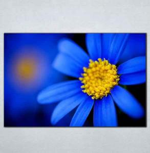 Slike na platnu Plavi cvet Nina095_P