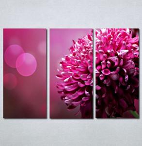 Slike na platnu rozi cvet_Nina131_3