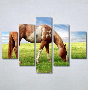 Slike na platnu Slika konja Nina30358_5