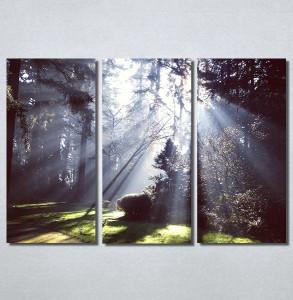 Slike na platnu Svetlost u šumi Nina30180_3