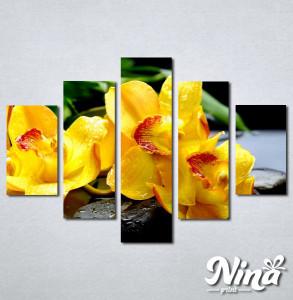 Slike na platnu Žuta orhideja Nina252_5