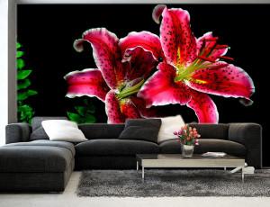 Foto tapeta Veliki bordo cvetovi Tapet118