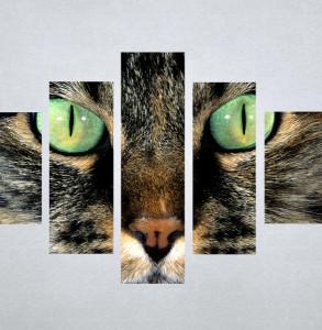 Slika na platu Mačka Nina3045_5