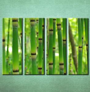 Slike na platnu Bambus Nina3093_4