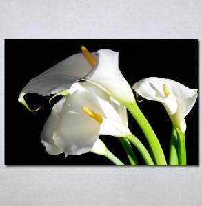 Slike na platnu Bele kale Nina30134_P