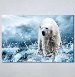 Slike na platnu Beli medved Nina30272_P