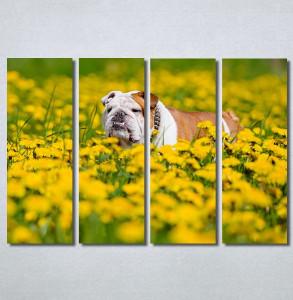 Slike na platnu Buldog Nina30234_4