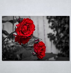 Slike na platnu Crvene ruže Nina098_P