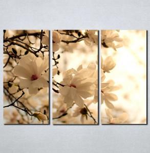 Slike na platnu Cvet voćke u proleće Nina099_3
