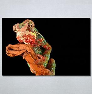 Slike na platnu Kameleon Nina30183_P
