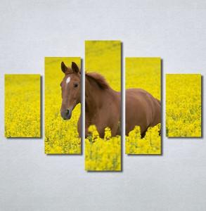 Slike na platnu Konj na žutoj poljani Nina30264_5