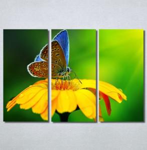 Slike na platnu Leptir Nina30237_3