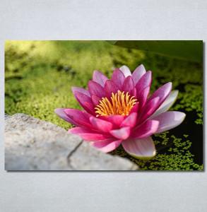 Slike na platnu Lila lokvanj Nina30282_P