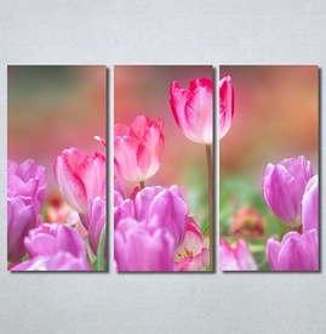 Slike na platnu Pink lale Nina30270_3