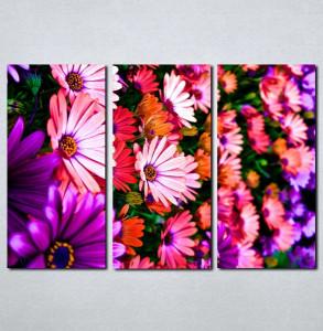Slike na platnu Šareno cveće Nina056_3