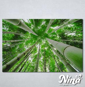 Slike na platnu Suma bambusa Nina329_P