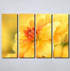 Slike na platnu Žuto cveće Nina111_4