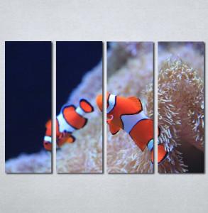 Slika na platnu Riba nemo Nina3081_4